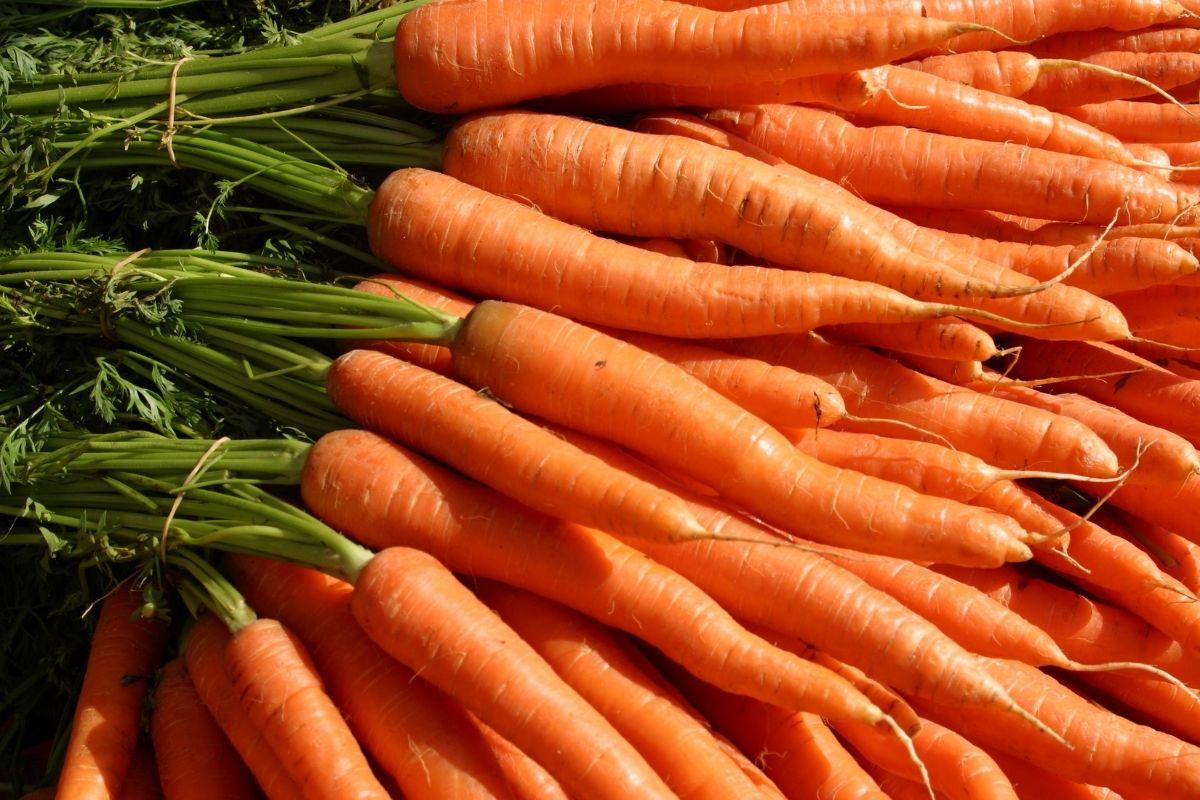 vegetables-cho-tre-lop-1-1