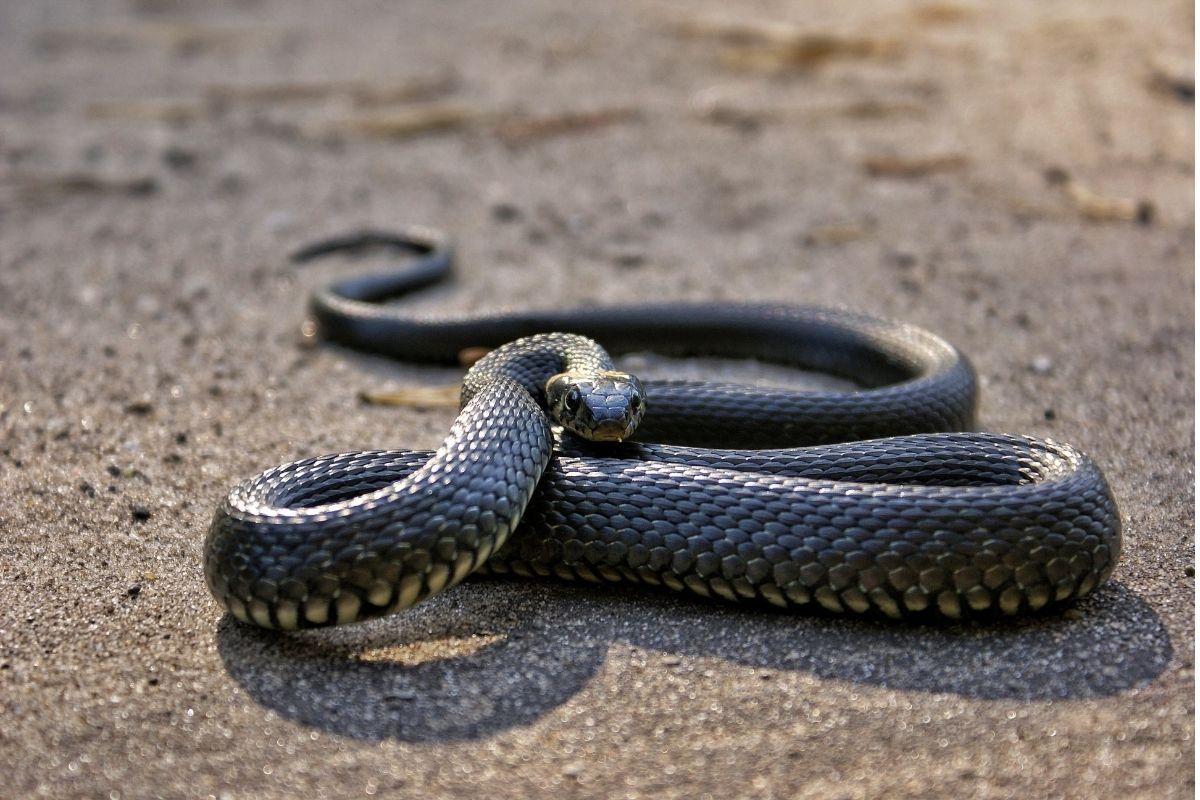 Halloween animals - snake