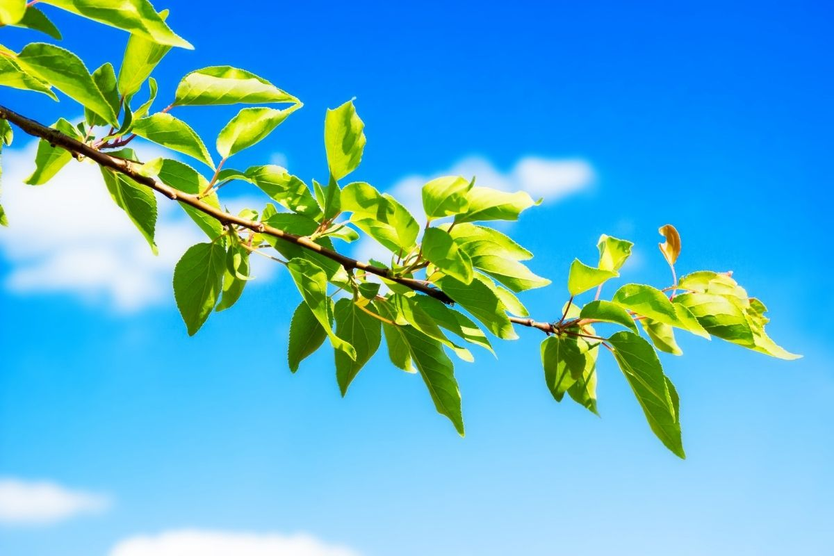plants-and-trees-10