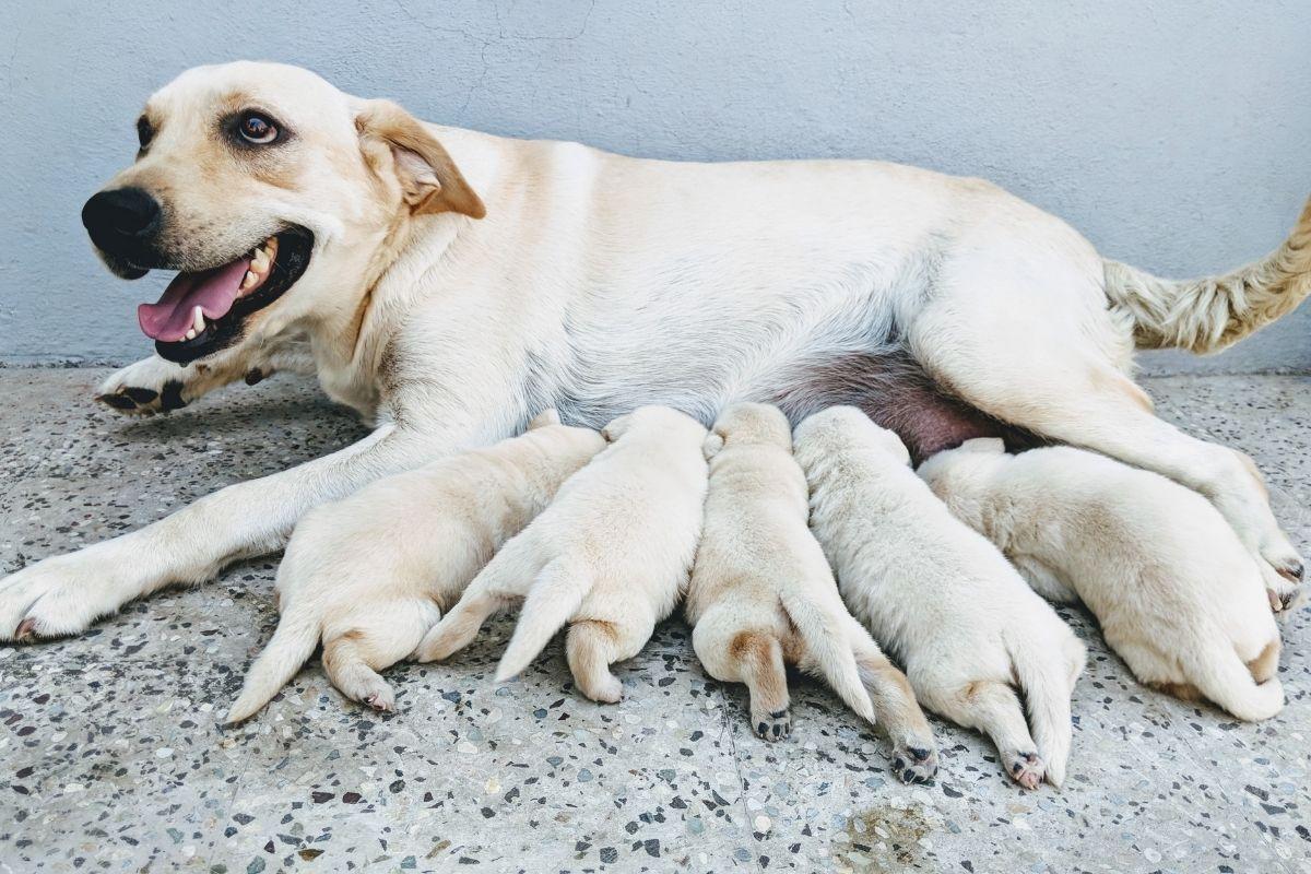 animal-families-2