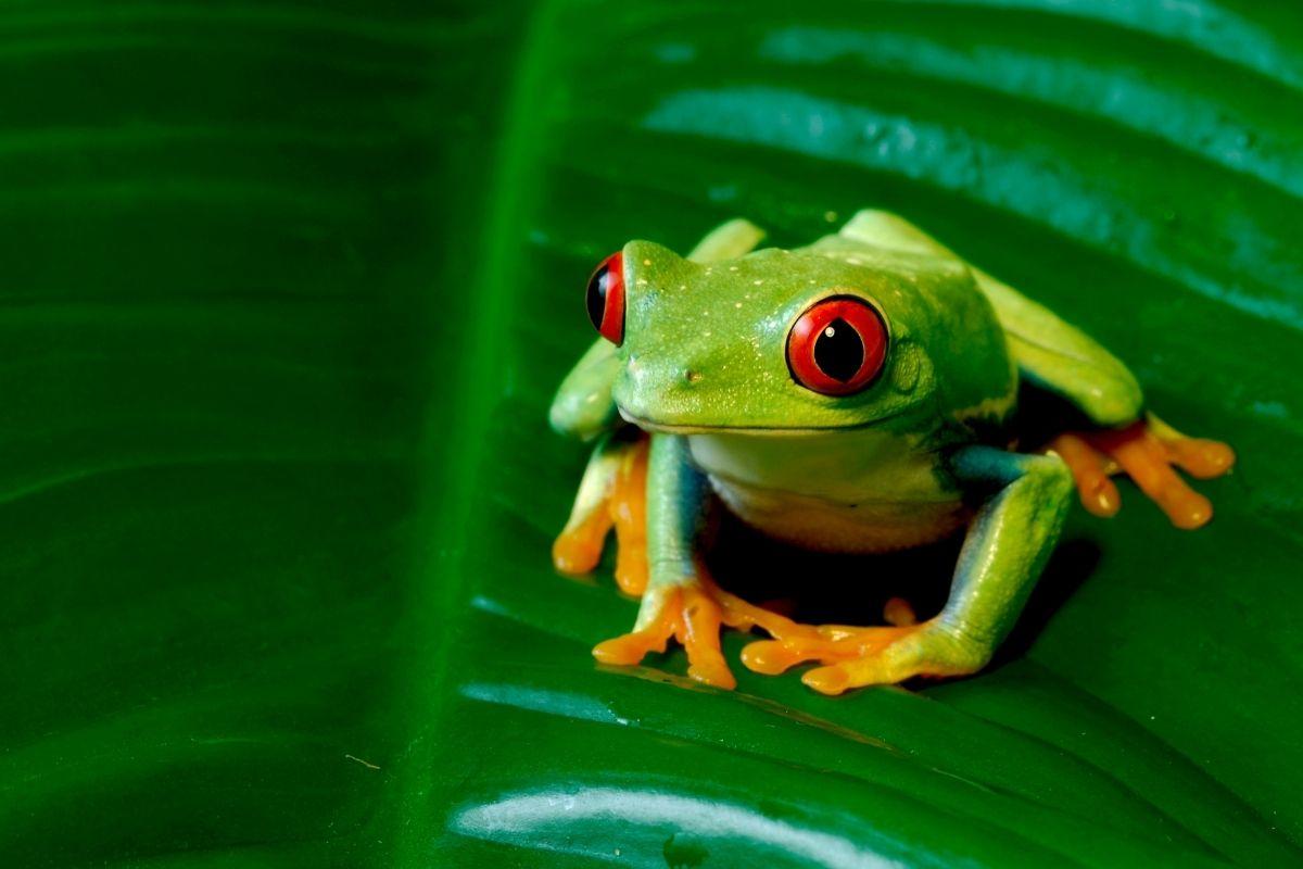 Halloween animals - frog