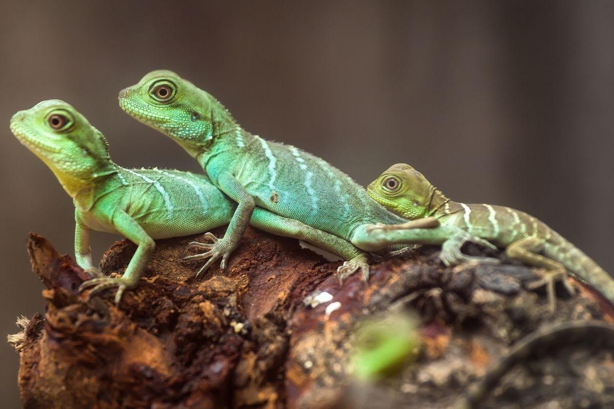 Halloween animals - lizard