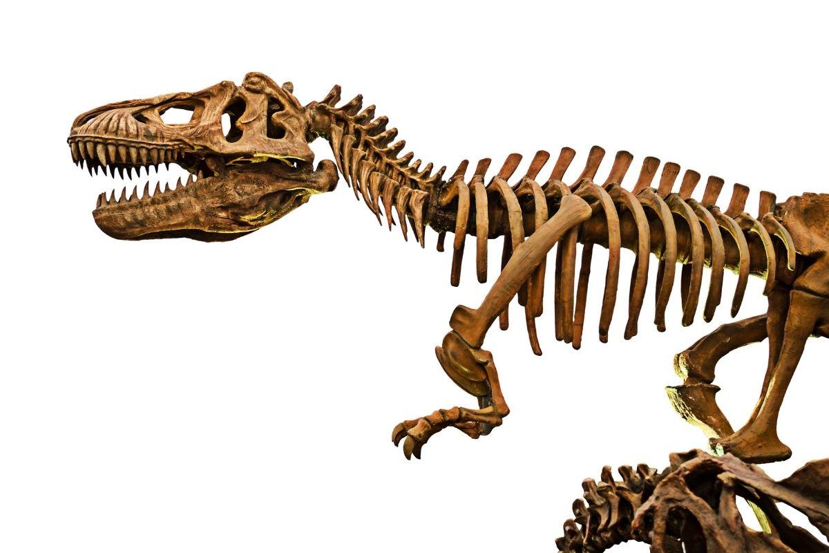 dinosaurs-8