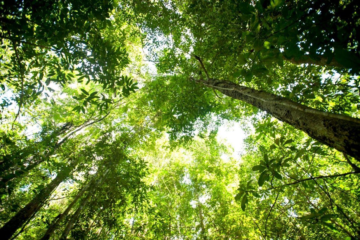 rainforest-8