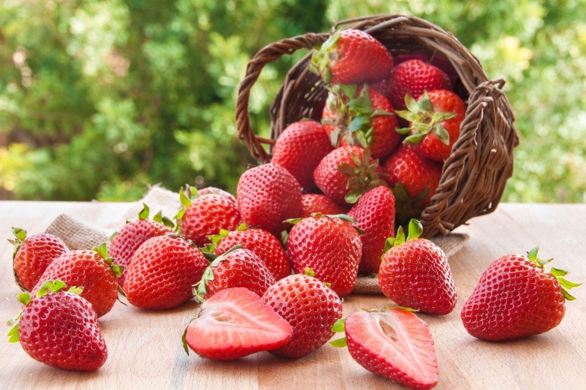 fruits-cho-tre-lop-1-8