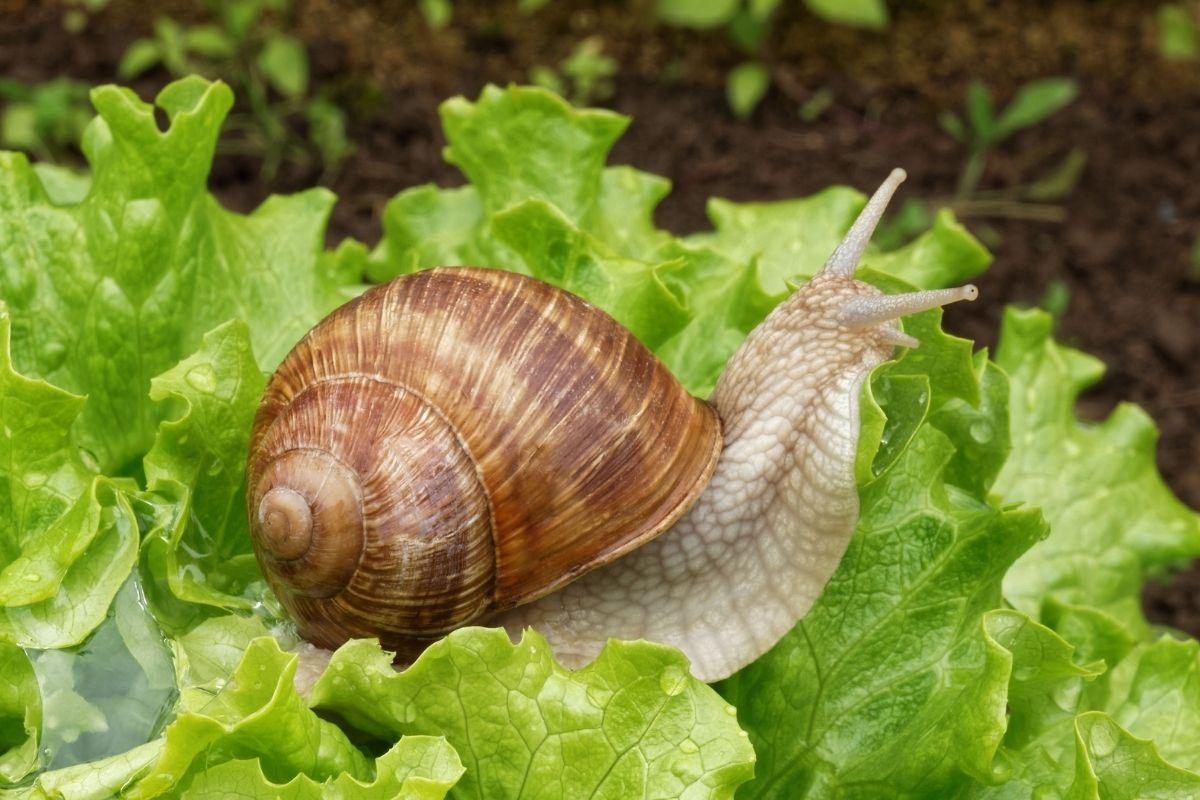 Halloween animals - snail