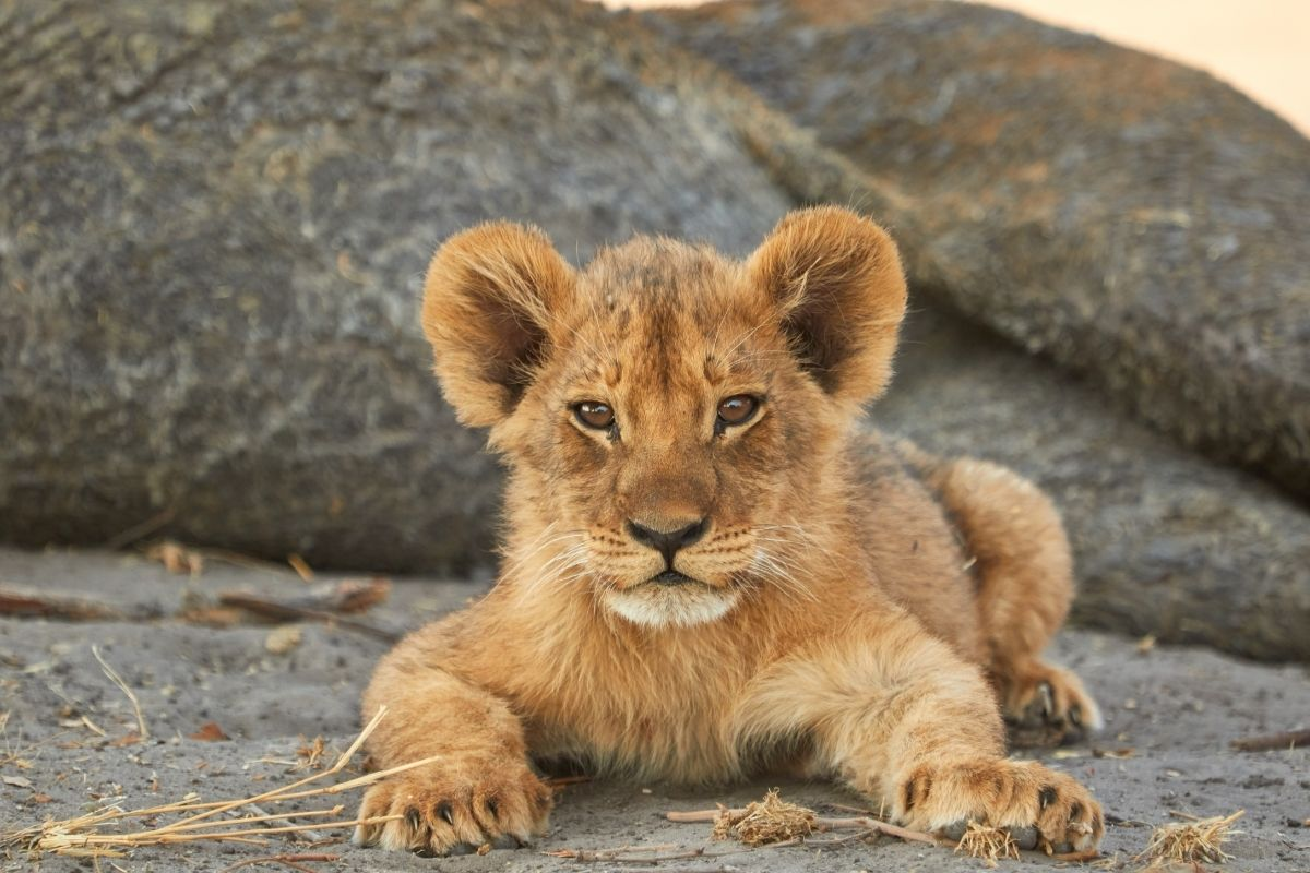 young-animals-1