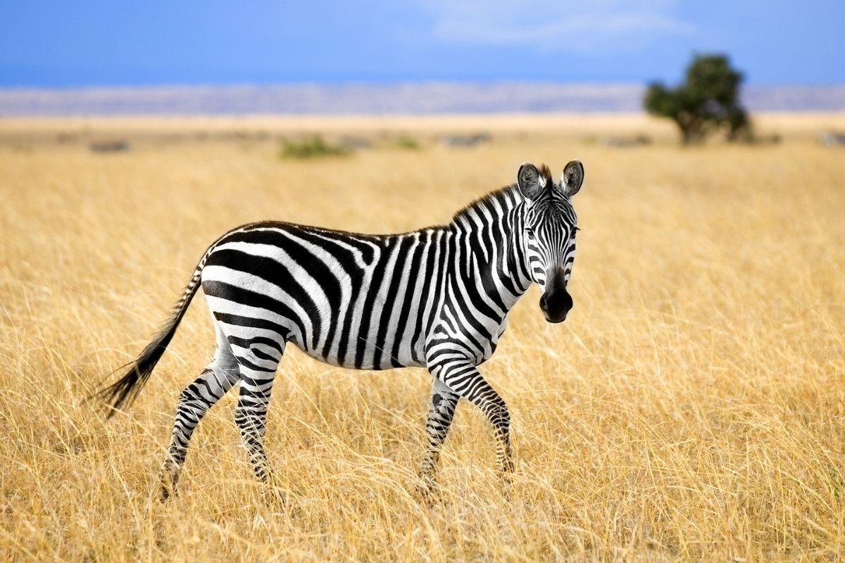 land-animals-10