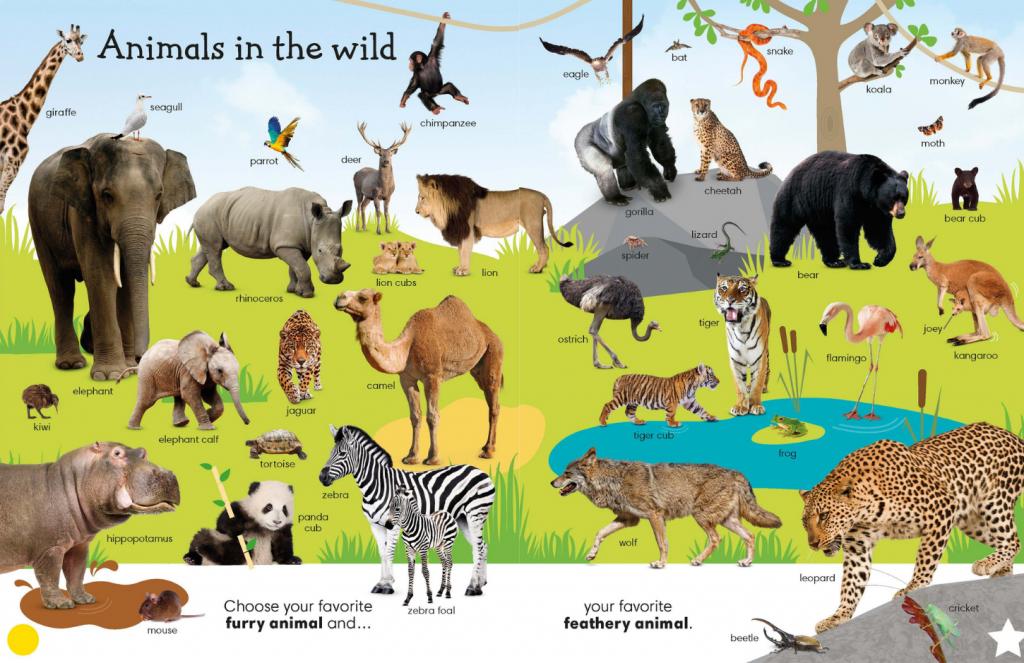 animals-in-the-wild